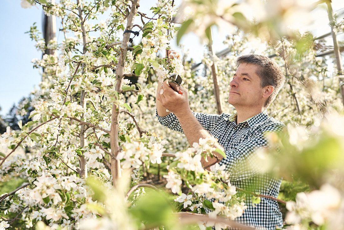 Werbefotografie, People Fotograf in Sueddeutschland, Bodenseekreis, fuer authentische Marken und Fotoreportagen, Obstblüte bis zur Obsternte, Firmenportrait