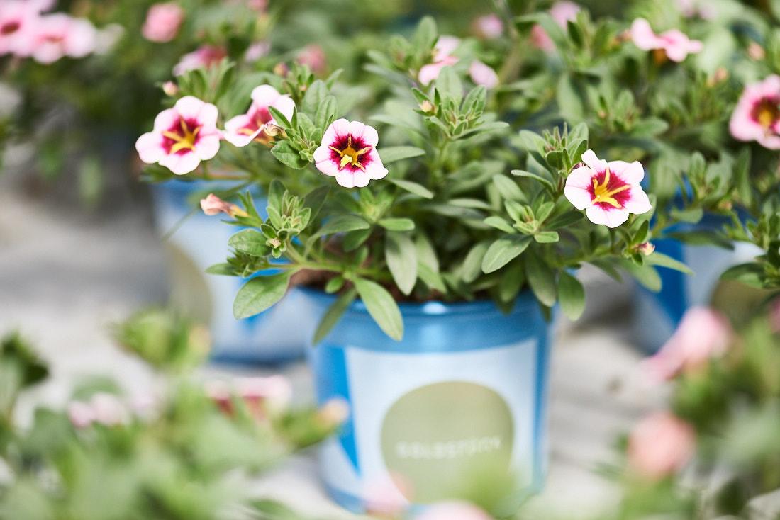 authentische Werbefotografie Baden-Württemberg: Blumen Hersteller